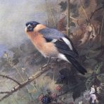 Wildlife Art (AH101L)