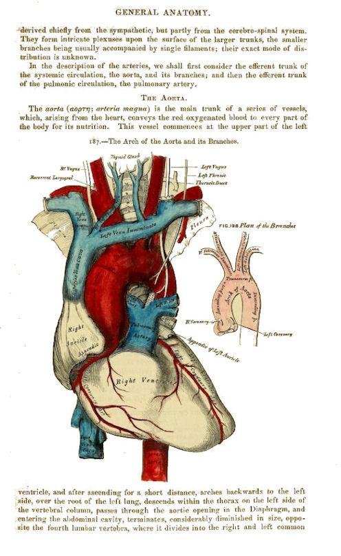 Grays Anatomy Anatomy Descriptive And Surgical Ams108l Ellie