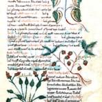 Herbarium (BH101L)