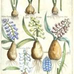 Florilegium Amplissumum et Selectissimum (BH104L)