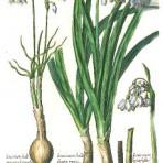 Florilegium Novem (BH106)