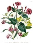 Ladies' Flower Garden of Ornamental Annuals (BH118)