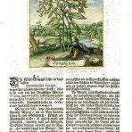 Viridarium Reformatum (BH126)