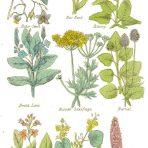 Complete Herbal (BH129L)