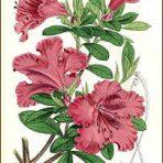 Jardin Fleuriste (BH130) – Florist Garden