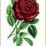 Les Roses (BH131L)