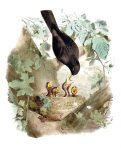 Les Oiseaux les plus remarquables (BI105L)