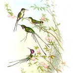 Hummingbirds (BI107)