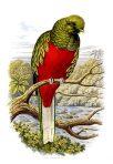 Book of birds (BI108L)