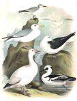 Birds of North America (BI109)