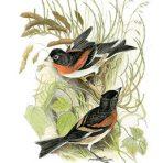 Birds Drawn from Nature (BI112L)
