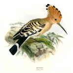 A History of the Birds of Europe (BI115L)
