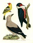 American Ornithology (BI120)