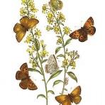 British Butterflies (BU102L)