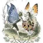 Les Papillons Metamorphoses Terresteres Des Peuples De L'Air (BU103)