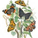 Cassells Book of European Butterflies and Moths (BU104)