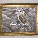 Barn Owl (DA101)