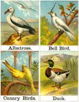 Alphabet of Birds (CH107)