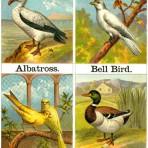 Alphabet of Birds (CH107)