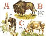 An Animal Alphabet (CH110)