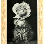 Kittens & Cats (CH155)