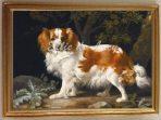King Charles Spaniel (G130)