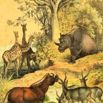 Instructive Picture Book (NH113)