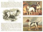 Illustrated Book of the Dog (NH115)