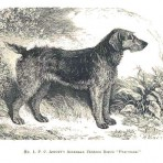 Dogs of Britain (NH117L)