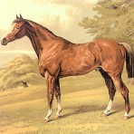 Cassells book of the horse (NH118)