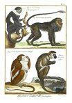 Tableau Encyclopedique er Methodique des Trois Regnes de la Nature (NH120L)