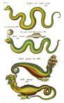 Historiae Naturalis (NH123L)