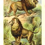 Johnson's Household Book of Nature (NH124)
