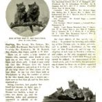 Cassells The Book of the Cat (NH126)