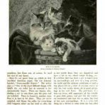 Cassell's Book of the Cat (NH133)