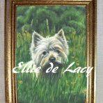 Angus, West Highland Terrier (OP902)