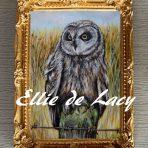Short Earred Owl (OP919)