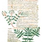 Herbology (SP102)