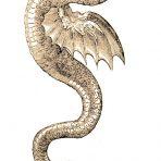 Historia Serpentum et Draconum (SP109L)
