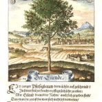 Der Fruchtbringenden Gesellschaft (ST101) – The Fruitful Society