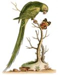 Natural History of Uncommon Birds (ST102L)