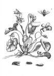 Der Raupen Wunderbare Verwandlung und Sonderbare Blumennahrung (ST108)