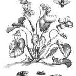 Der Raupen Wunderbare Verwandlung und Sonderbare Blumennahrung (ST108) – 'The caterpillars' miraculous metamorphosis and strange flower food'