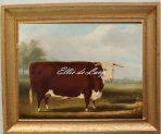Hereford Bull (V115)