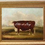 Hereford Cow (V116)